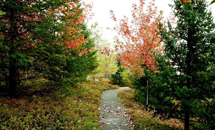 A crushed granite path is bordered by a newly planted woodland of deciduous and evergreen trees.&#8\2\17;