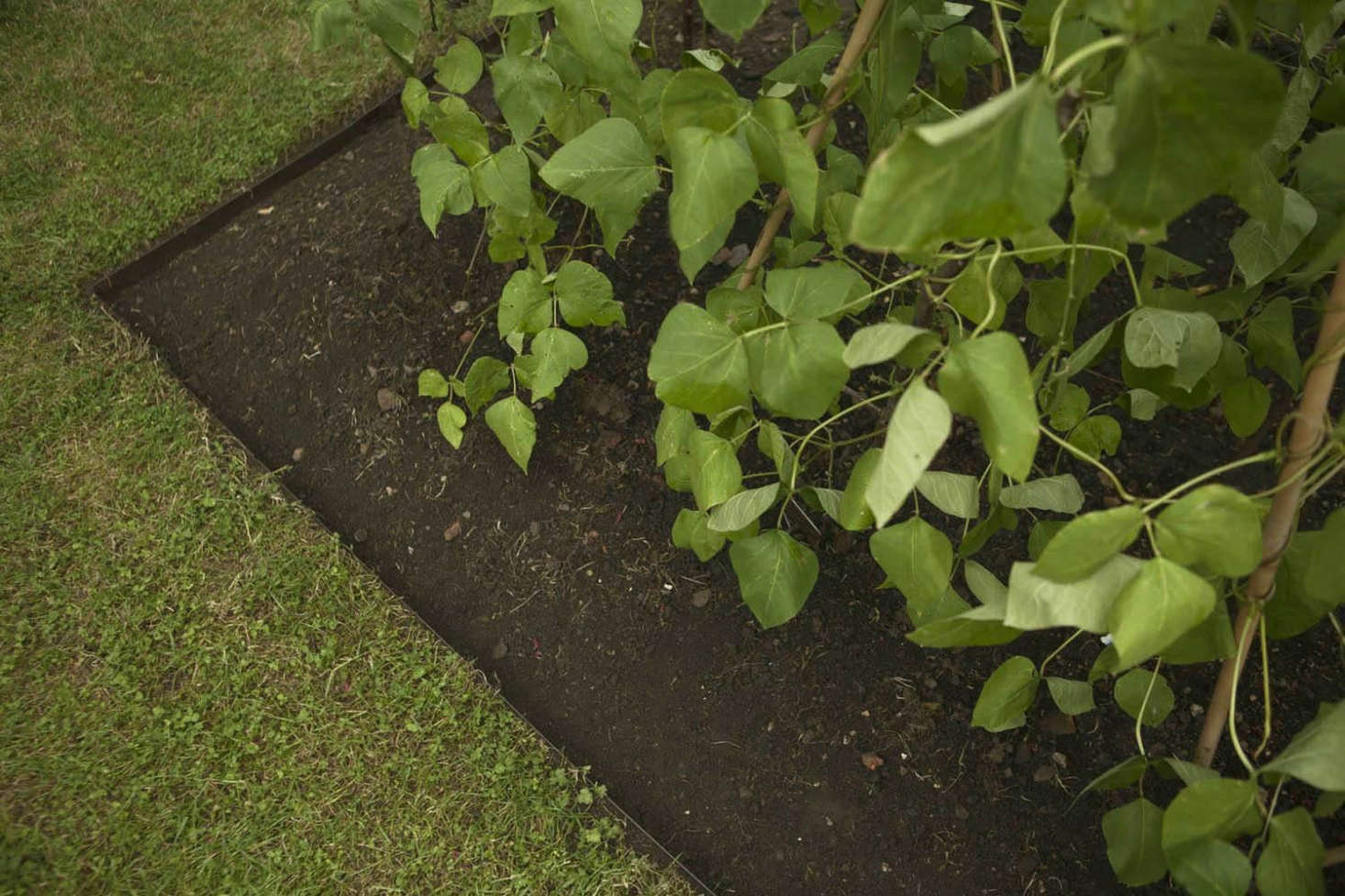 Metal landscape edging stops the creeping tendency of some weeds.