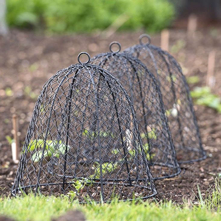 A dome-shaped steel-framed wire cloche with spiked feet can be secured in the ground to foil garden critters. A Squirrel Proof Cloche is available in two sizes and is currently marked down to from £\16.\14 to £\2\2.09 depending on size at Crocus.