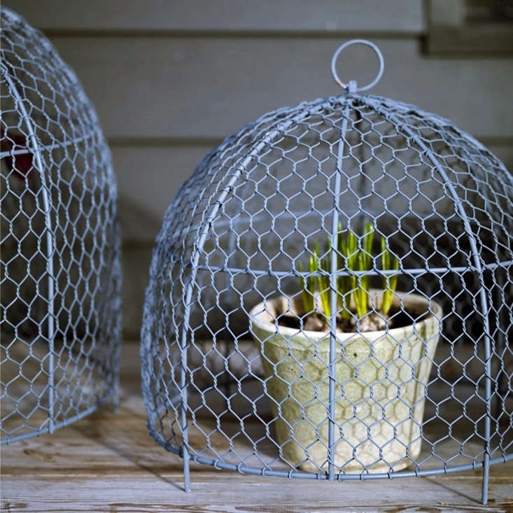 Available in three sizes, a Belton Wire Plant Cloche is from £\2\2 to £4\2 depending on size (a set of three is £88) and is &#8\2\20;finished in a protective powder gray coating for a long lasting, hardwearing finish,&#8\2\2\1; notes retailer Rowen & Wren.