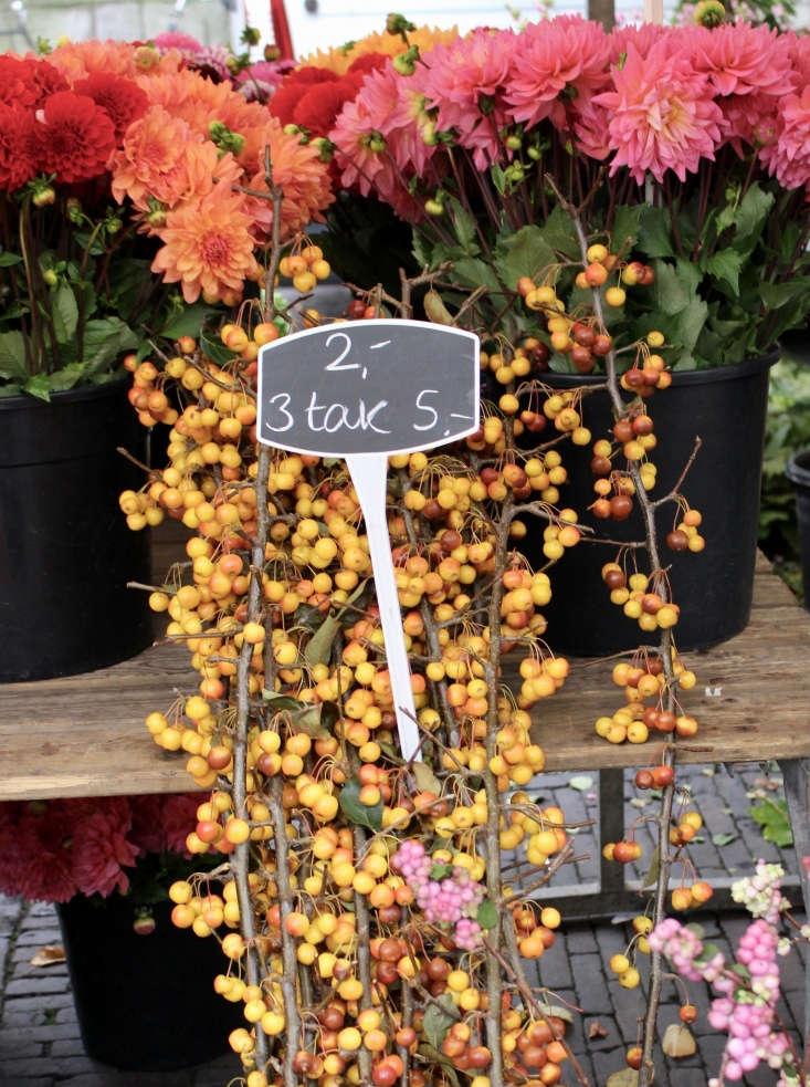 Seasonal crabapples and dahlias.