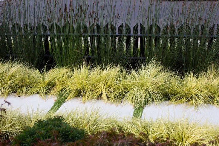 Variegated Japanese sedge (Carex morrowii &#8