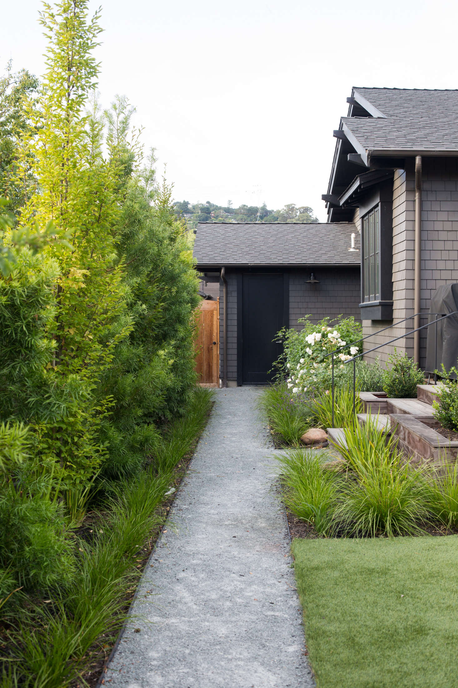 A decomposed granite (DG) path runs the length of the back garden and fast-growing fern pines (Podocarpus gracilior) create a privacy screen inside the back fence.