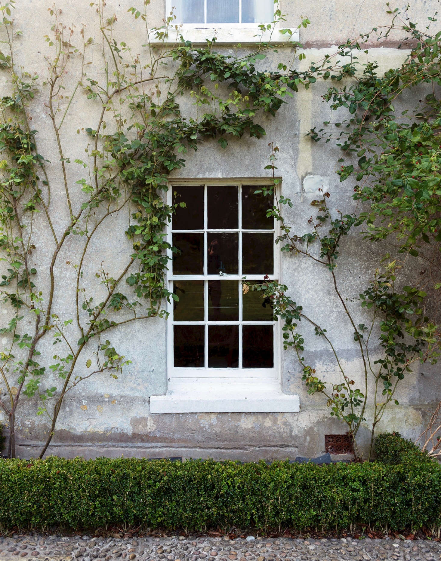 Foundation plantings of boxwood and rose vines connect the facade of Pentreath and McCormick&#8