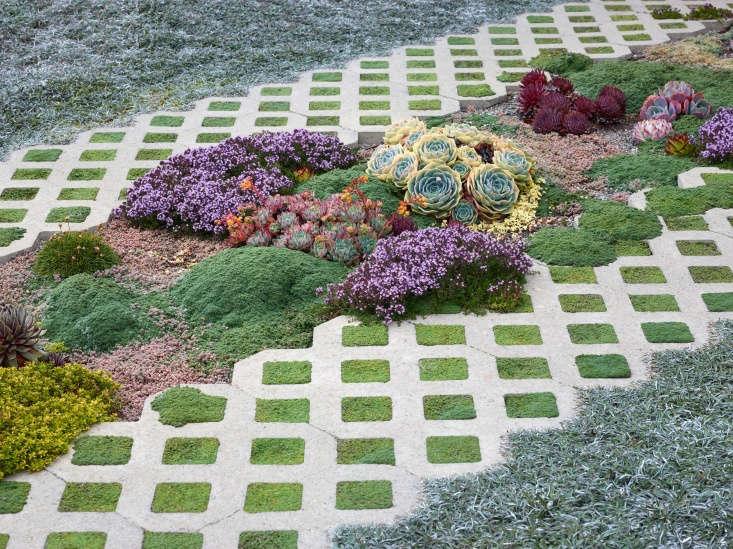 The Nash driveway&#8\2\17;s succulents garden includes varieties of sedum, echeveria, and sempervivum, all no taller than 6 inches.