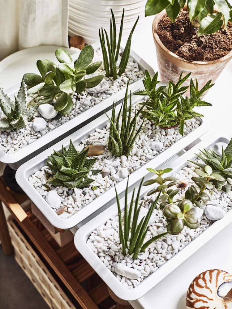Cacti and succulents potted in Ikea&#8