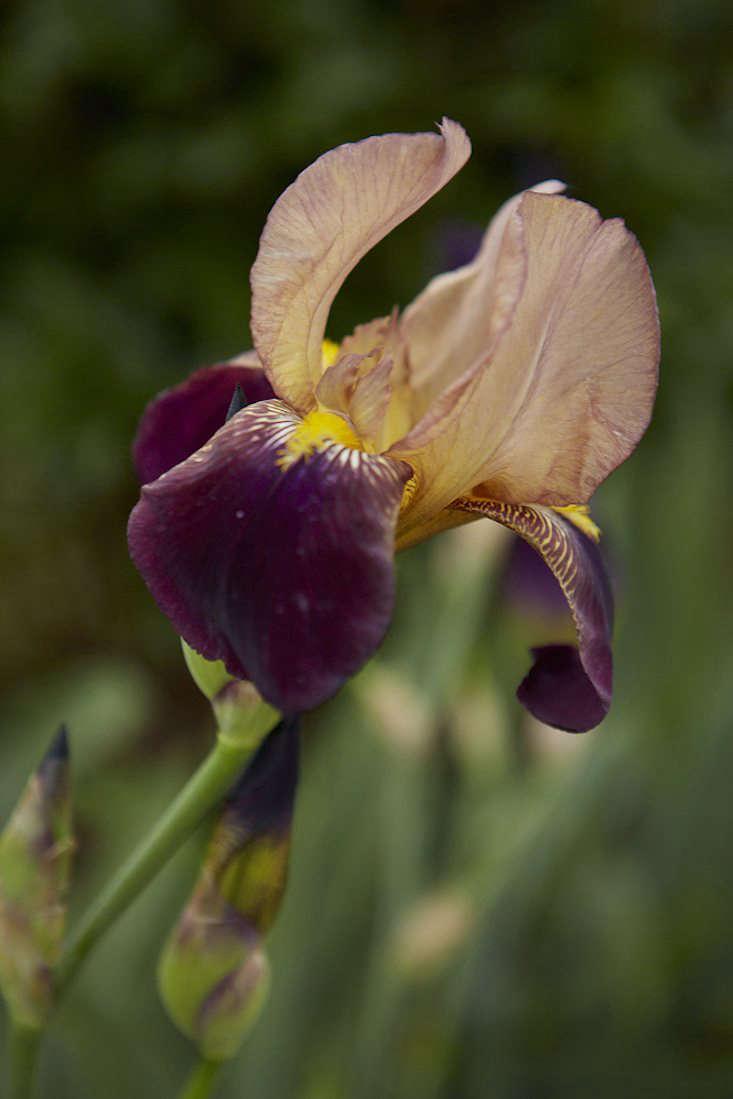Iris &#8