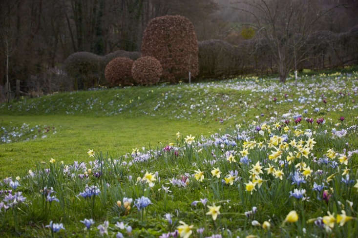 Dwarf irises naturalize and mingle well with crocuses.