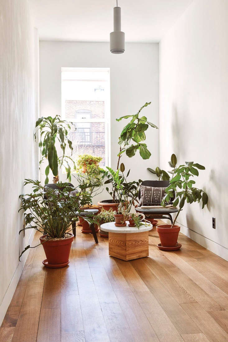 Spotted on Remodelista: A jungle of potted plants in an upstairs alcove in a recently renovated brownstone in Bed-Stuy, Brooklyn. See the interiors here; for a look at the eco-friendly garden, see Sustainable Solutions: A Modern Garden for a Historic Townhouse. Photograph by Jonathan Hokklo.