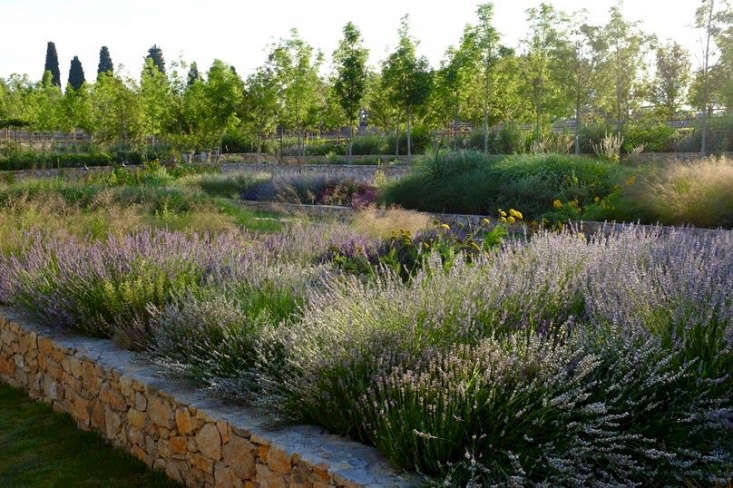 In a large garden near Grasse in Provence, British garden designer James Basson conserved water with a design that included lavender in &#8
