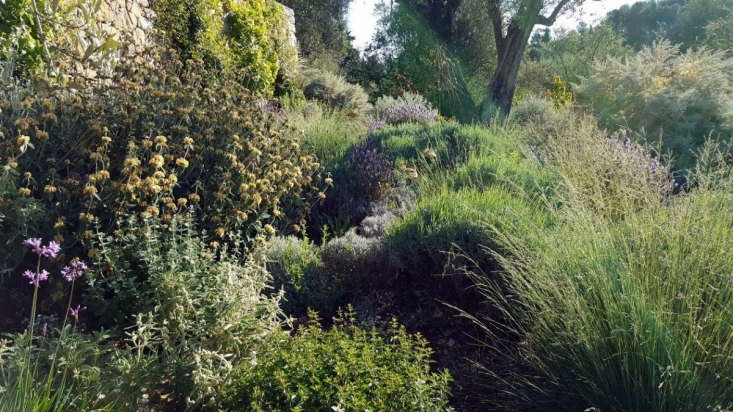 Emphasizing &#8\2\20;the architectural qualities&#8\2\2\1; of phlomis and perennials grasses, Basson created a four-season landscape in Opio that offers interest even in winter months.