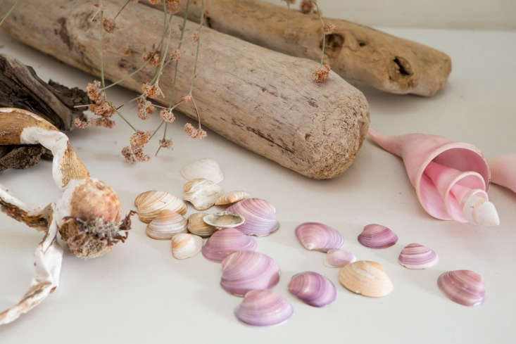 The still life is composed of beach wood, seaweed, pink shells from the flower market, and purple and white shells from a beach in Uruguay.