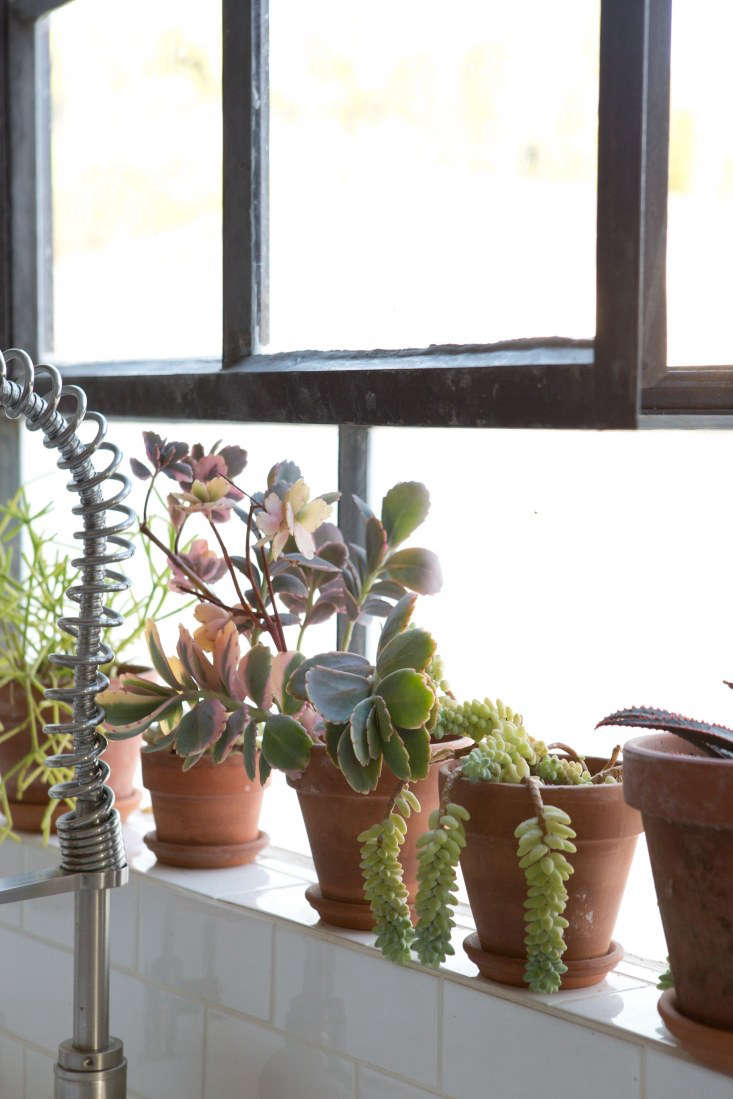 Sophia perched a handful of easy-growing succulents on the kitchen windowsill. It&#8