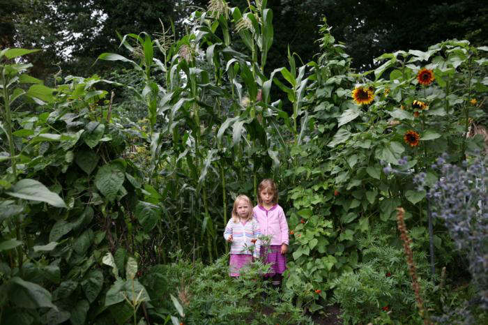 For more of this garden, see Bounty from a North London Allotment. Photograph by Howard Sooley.