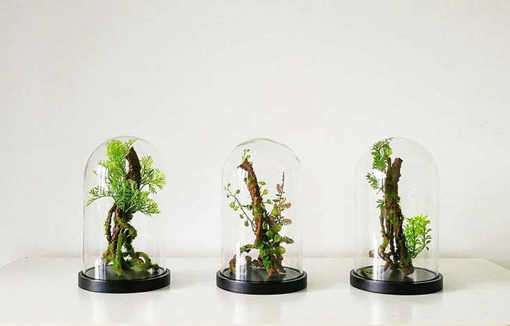 AForest Trio Cabinet Of Curiosities by Vert+Sauvage is $3.66 via Etsy.