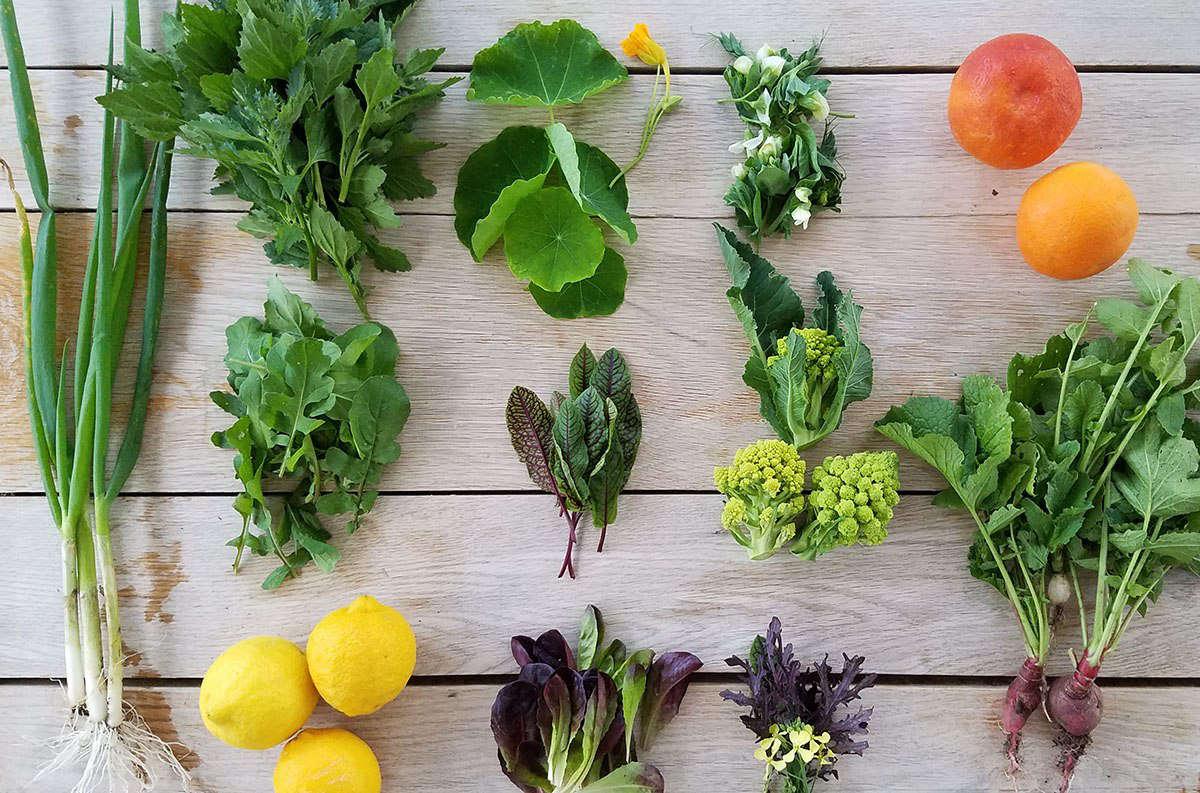 Kitchen garden forage by Marie Viljoen
