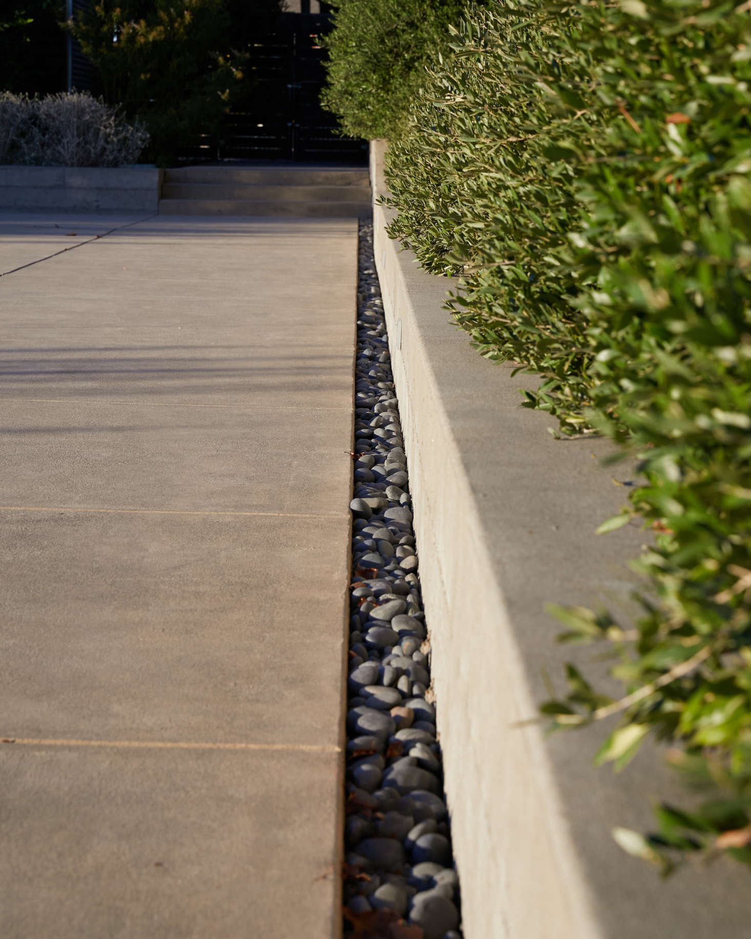 A long strip of polished stones borders the edge of the pool deck, accounting for drainage. To the right, a hedge of dwarf olive &#8