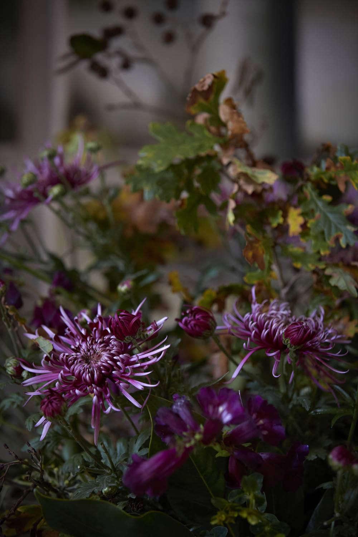 Spider chrysanthemum &#8