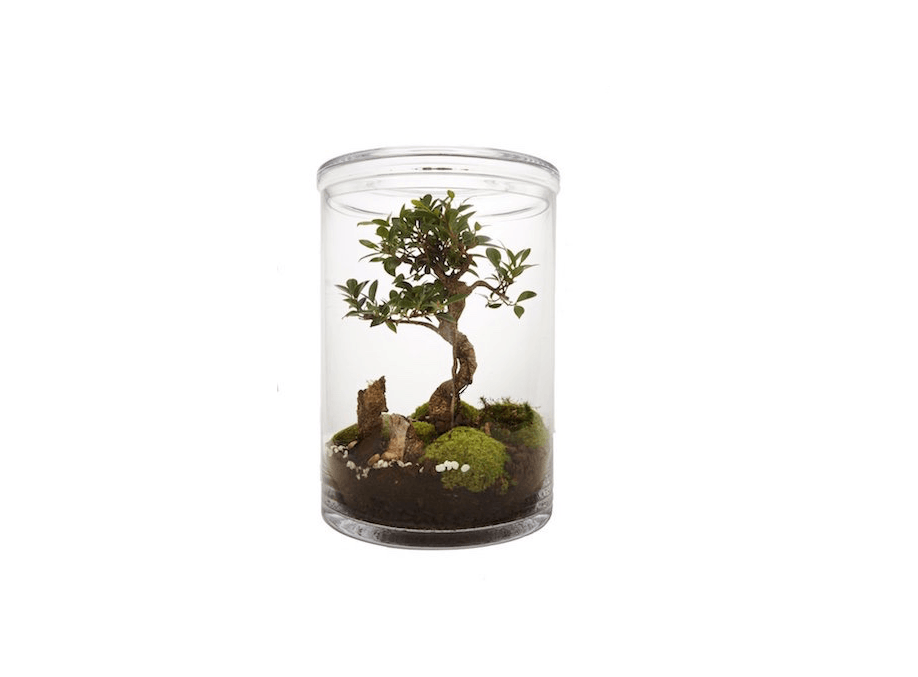 From Paris-based Green Factory, aBonsai Terrarium with a five-year-old tree is €0.