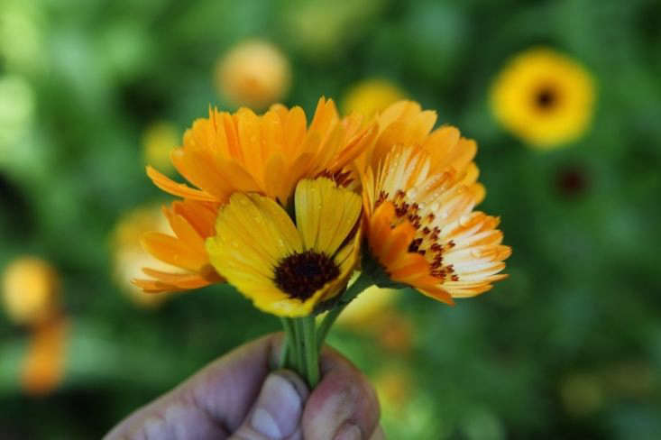 See more of this calendula posy in Required Reading: Plot , A Love Affair with Land. Photograph by Howard Sooley. Photograph by Howard Sooley.
