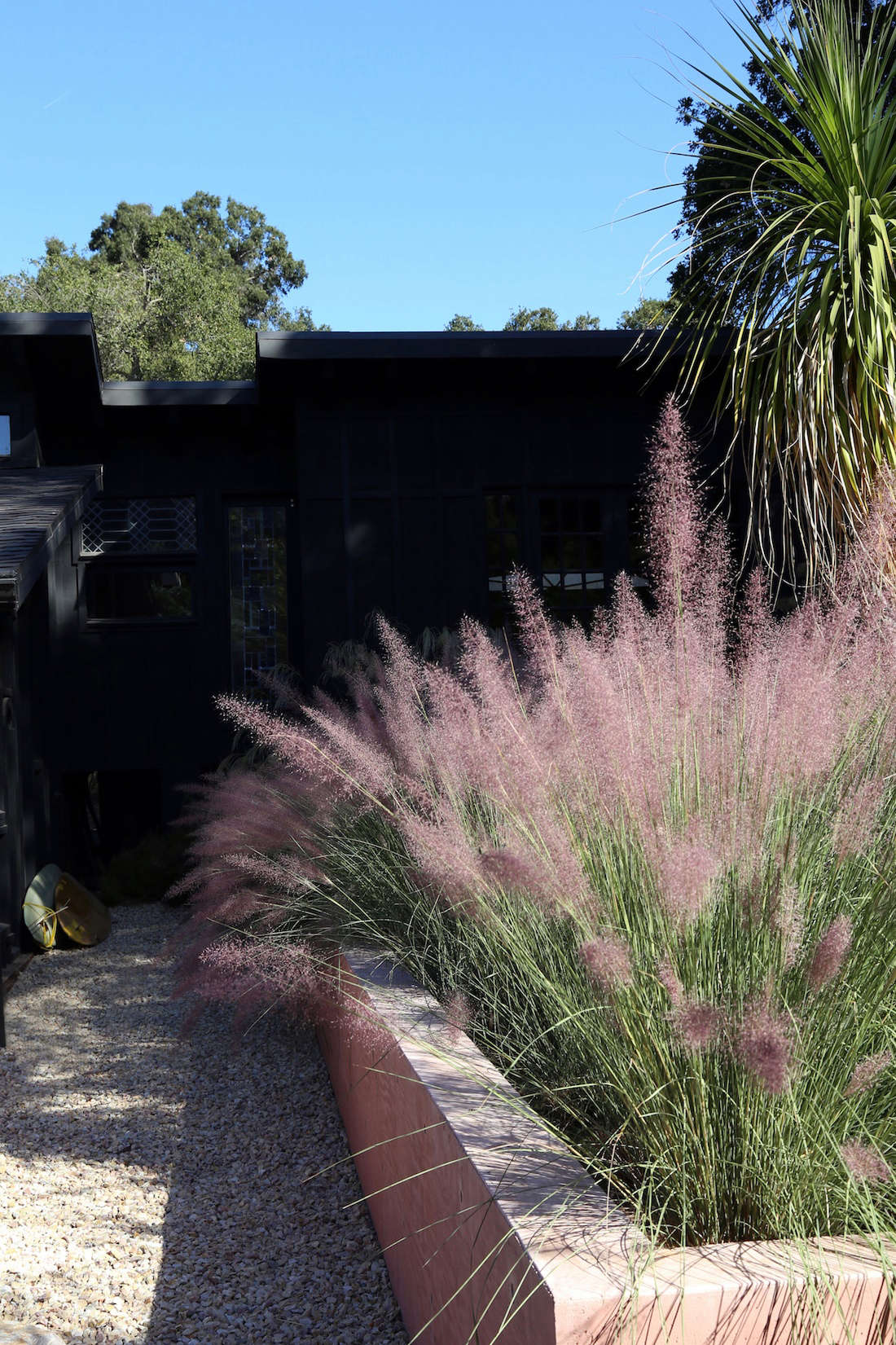 Pinkmuhlenbergia grass is the preeminent plant in the garden; it offers vibrant color during fall blooms.