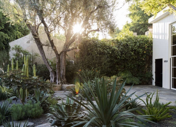 Fire-resistant succulents in a garden designed by Judy Kameon of Elysian Landscapes. Photograph by Matthew Williams for Gardenista, from Landscape Design:  Tipsfor a Fire-Safe Garden.