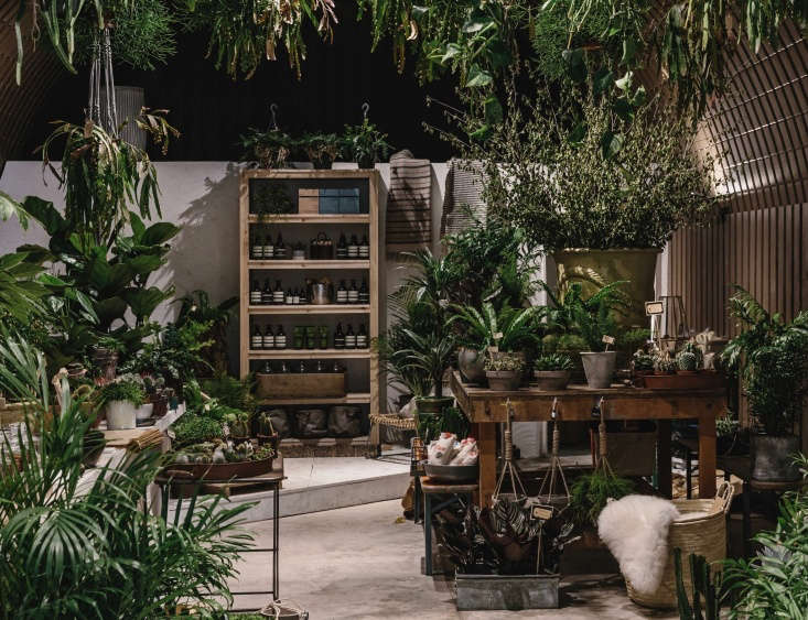 Both branches are packed with a glossy array of plants, from big-leaf monstera to trailing spider plants as well as cacti and succulents.