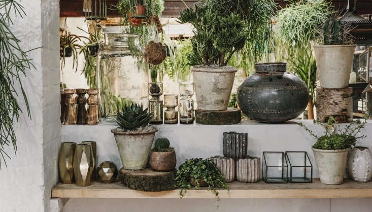 Perhaps because Fran is a florist first and foremost, there is a big emphasis on presenting a complete product. Shoppers can choose a houseplant and pot and then have it potted up in-store, ready to take home.