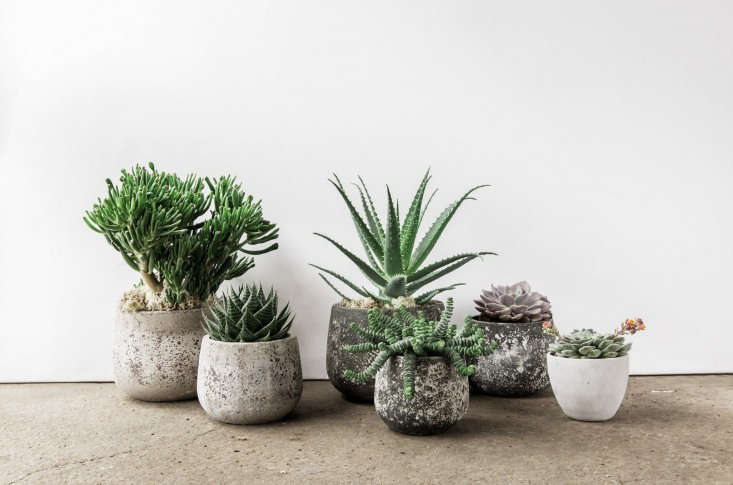 Fran tries to source ceramics from local makers. There are hand-polished concrete pots fromConpot (from £\20, depending on size) and beautiful small ceramic pots and bowls from Charlotte Grinling and Gareth Thomas.