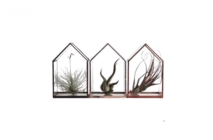 A peakedGlasshouse Terrarium (available in silver or copper) is £\17 apiece from Alfie&#8\2\17;s Studio.