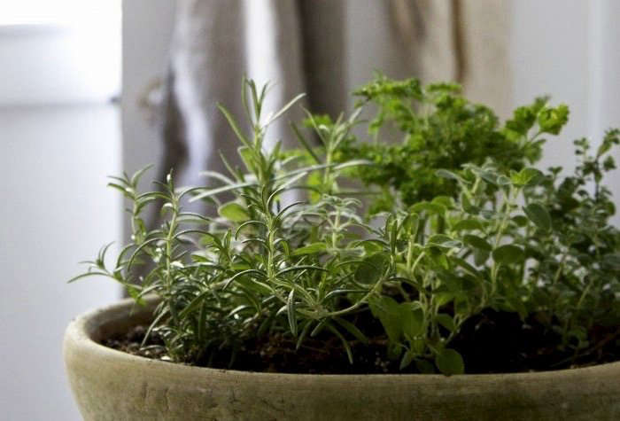 Grow your own, with our Small Space DIY: Countertop Herb Garden. Photograph by Erin Boyle.