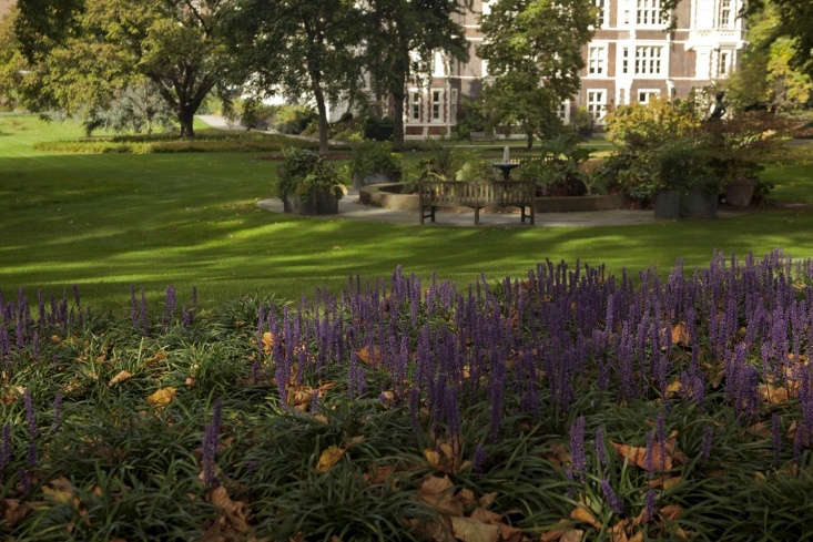 Aglow of purple from the shady ground cover Liriope muscari can be glimpsed through gaps in the hedge along the Victoria Embankment.