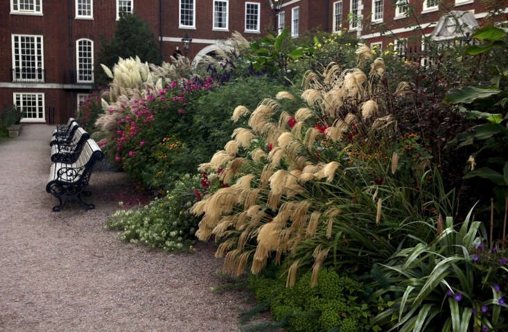 Tufts of Miscanthus nepalensis in the foreground, with self-seeded Clematis &#8
