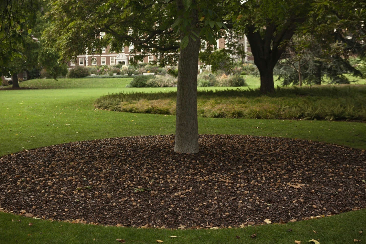 A large circle of mulch around a walnut tree. Photograph by Jim Powell, from Almost Private: A Secret River Garden in Central London.