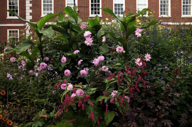 Big buildings, textural planting. Canna musifolia towers over dahlias, arching heads of pink Persicaria orientalis, and dark Hibiscus &#8