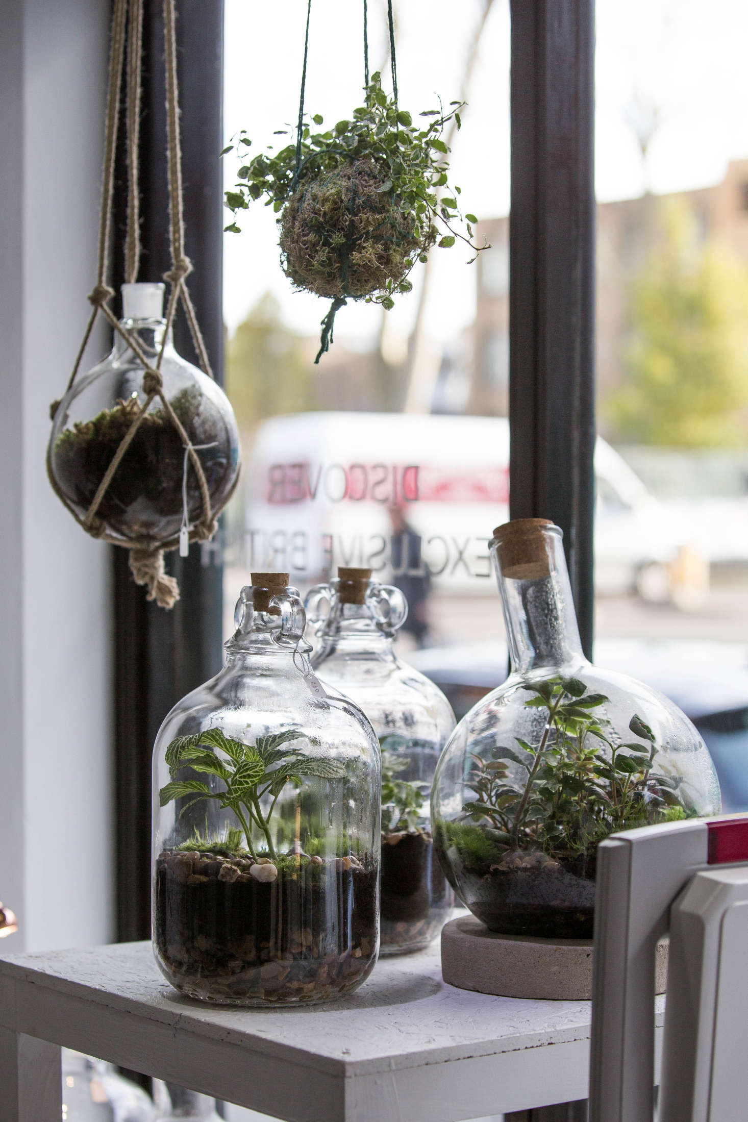 When Terrariums Go Bad 6 Tips For Troubleshooting Mold Yecch Gardenista
