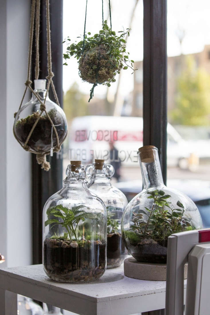 Happy, well-maintained terrariums bask in the sunlight in a shop window. See more at Studio Visit: Gardening Under Glass with Emma Sibley of London Terrariums. Photograph by Al Hartley courtesy of London Terrariums.