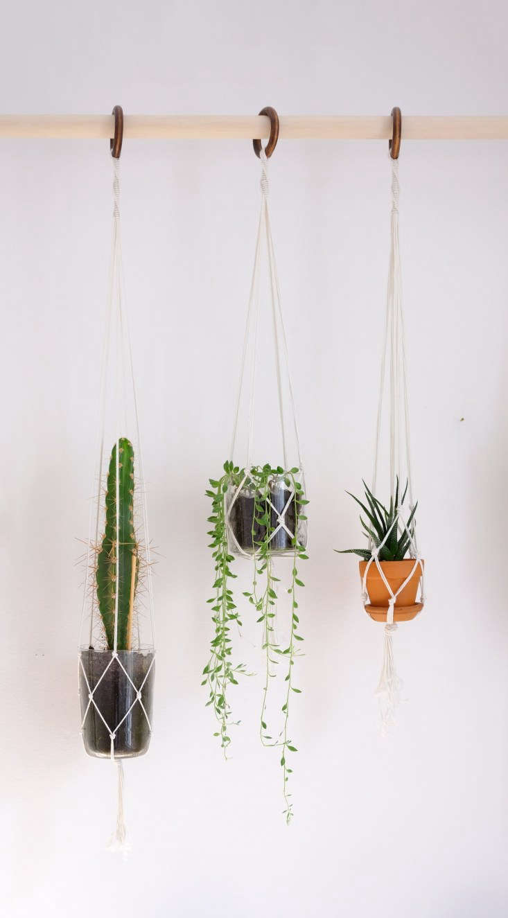 Detail of Maria Bergstrom's DIY plant wall with macrame plant hangers.