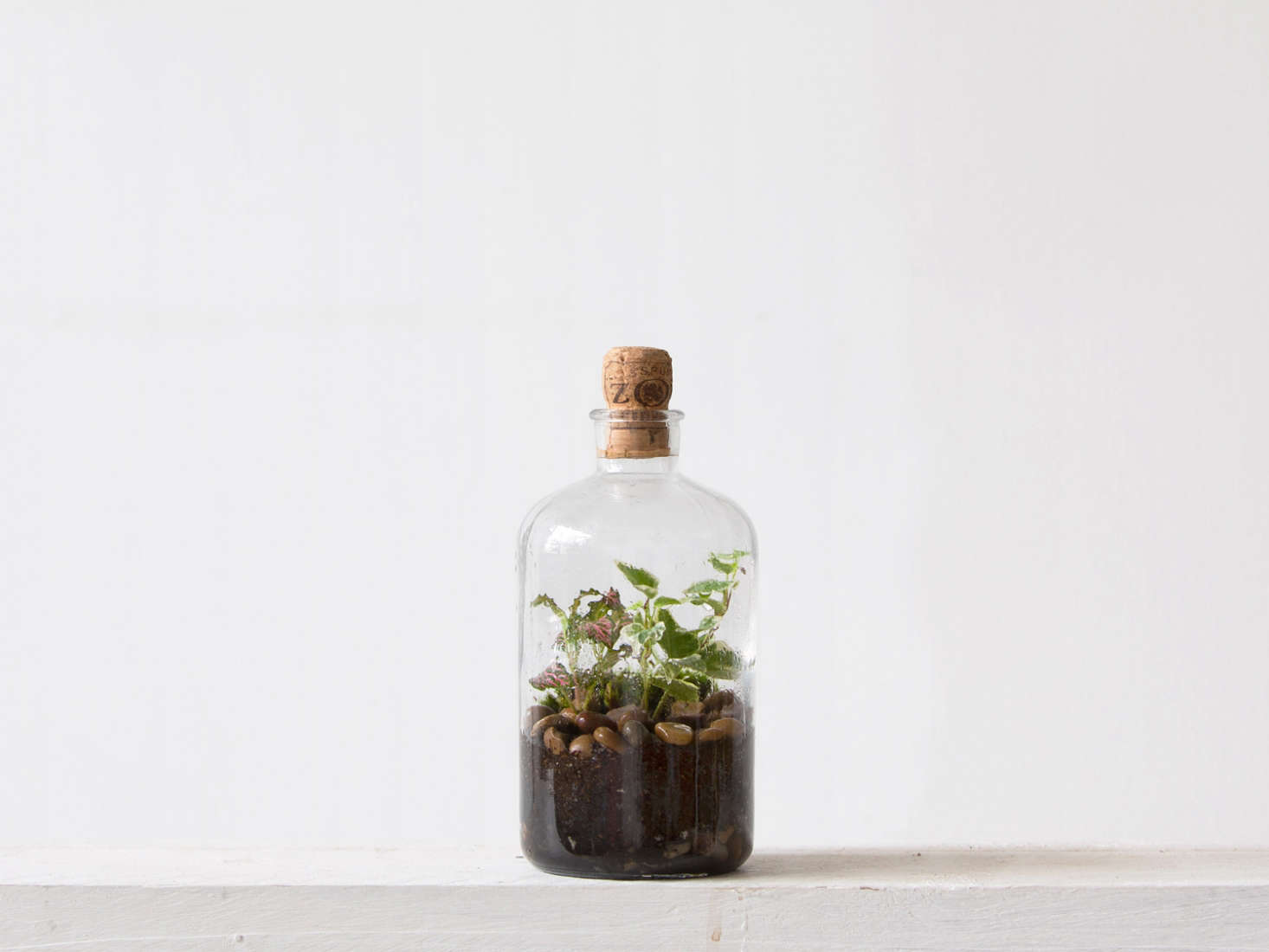 A Tinyjohn Terrarium, although a mere 7 inches high, is home to Fittonia Albivenis, a variegated Ficus Pumila, a variegatedHedra Helix, and cushion moss(Leucobryum Glaucum); it is £50 from London Terrariums.