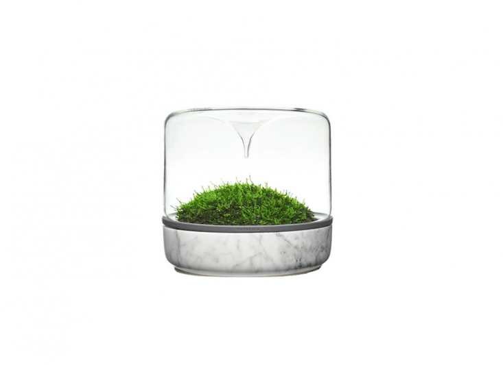With a glass dome designed to funnel water drops downward, a Sanctuary M Rainforest Carrara terrarium with a marble base keeps moss moist; $99. AU from Botanica.