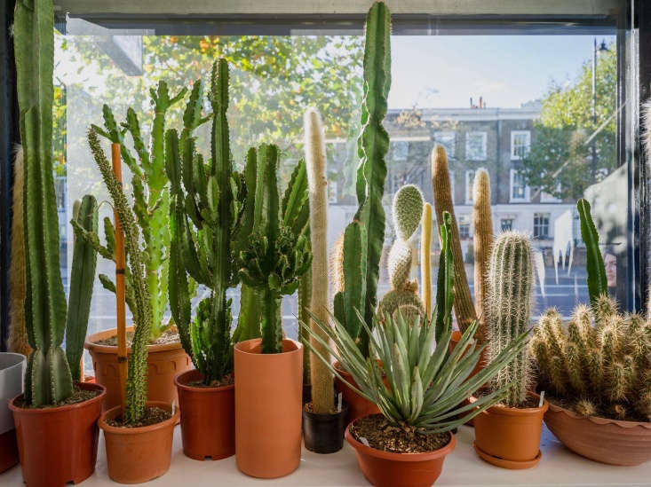 The shop window is filled with a forest of cacti.