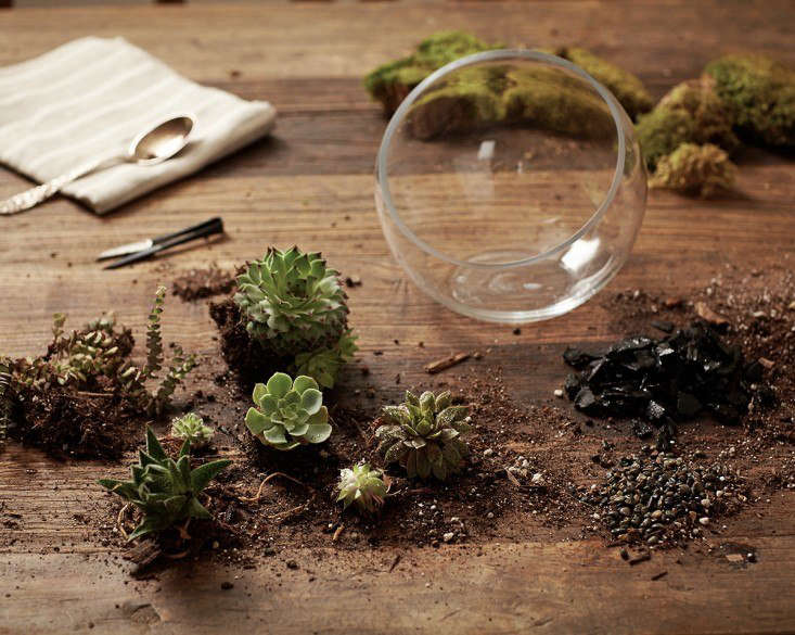 Succulents thrive in a cactus mix or potting soil with gravel or sand mixed in. See more in Gardening src=