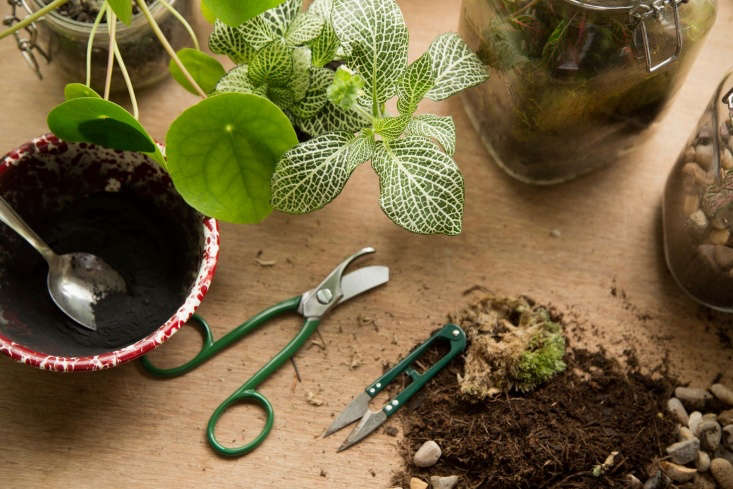 Terrarium care \10\1. Start with clean tools, healthy plants, sterile soil. Photograph by Al Hartley courtesy of London Terrariums.