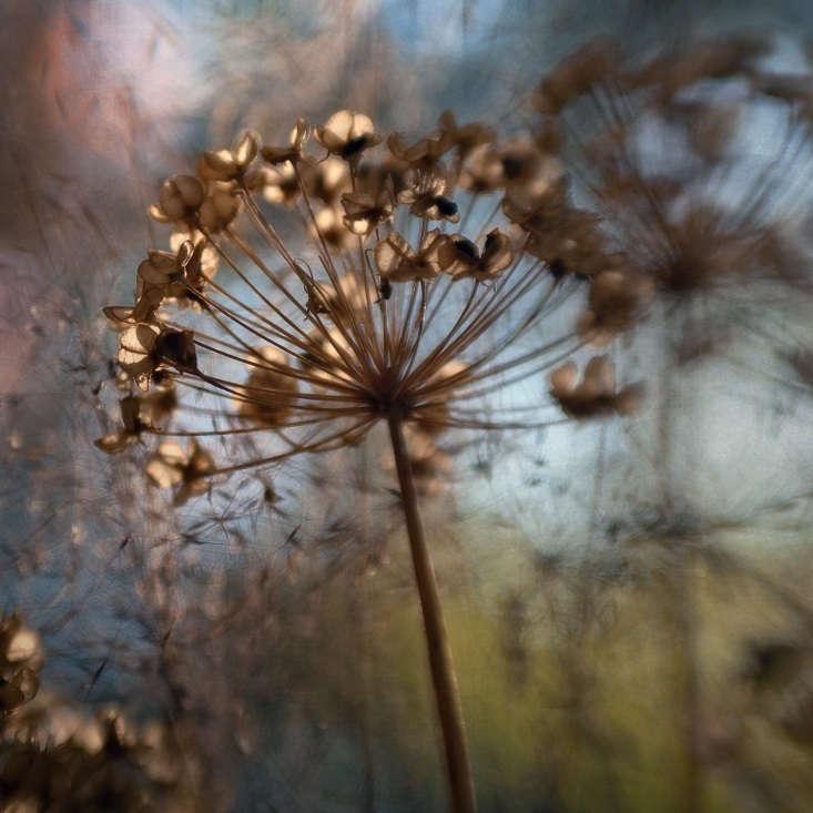 An allium in December. Photograph by Anne Worner via Flickr.