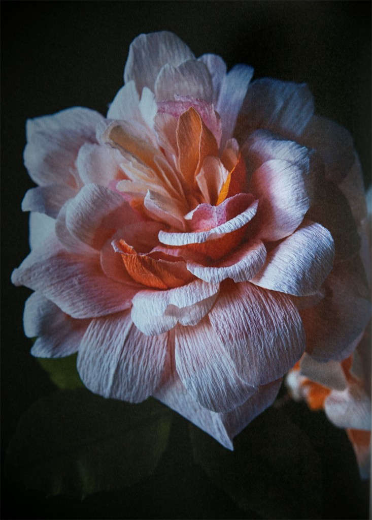 A rose that never fades; the author shares instructions on how to recreate her favorite flower, the large Rosa Perle D&#8