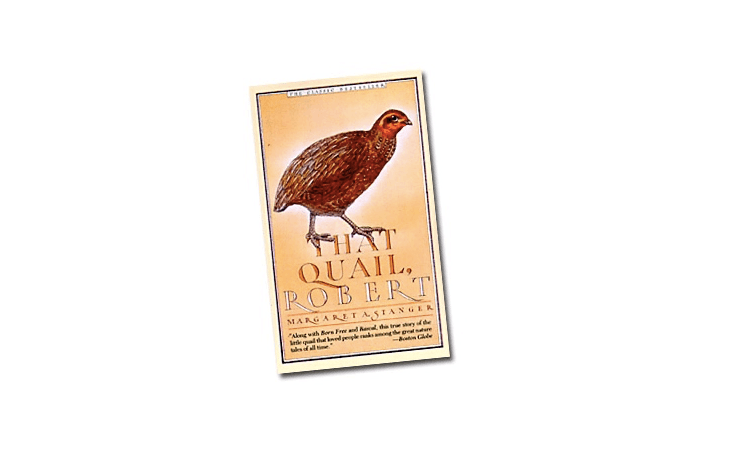 Published in 66, That Quail, Robertby Cape Cod author Margaret Stanger was a best-selling sensation. A paperback copy is $8.95 at The Bird Watcher&#8