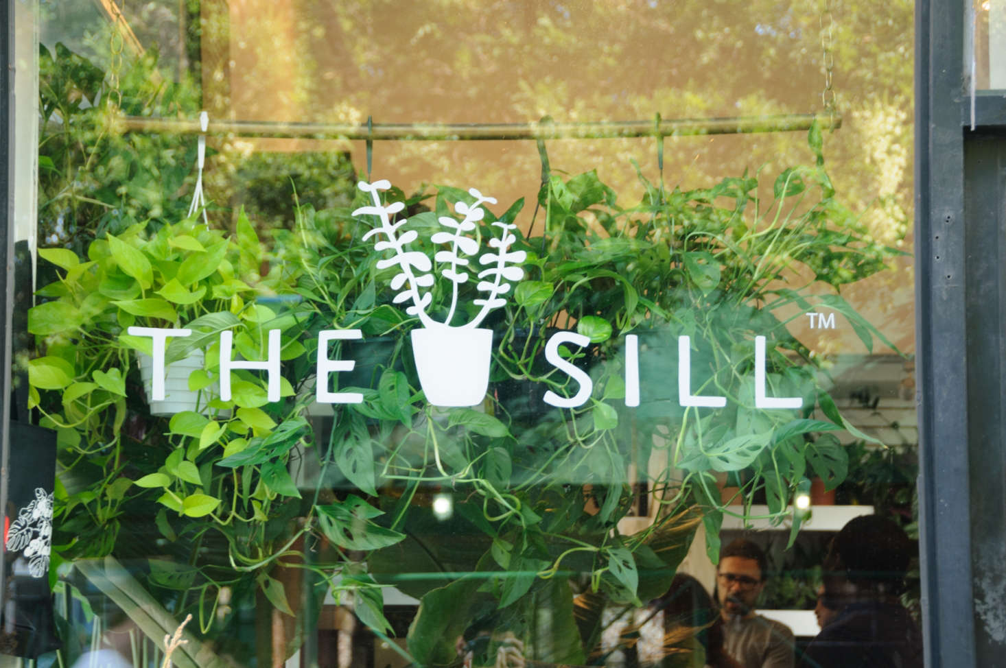 In addition to potted plant deliveries, The Sill provides plant design and maintenance services to companies in NYC and LA. Blank plans to next offer balcony and window box plants.