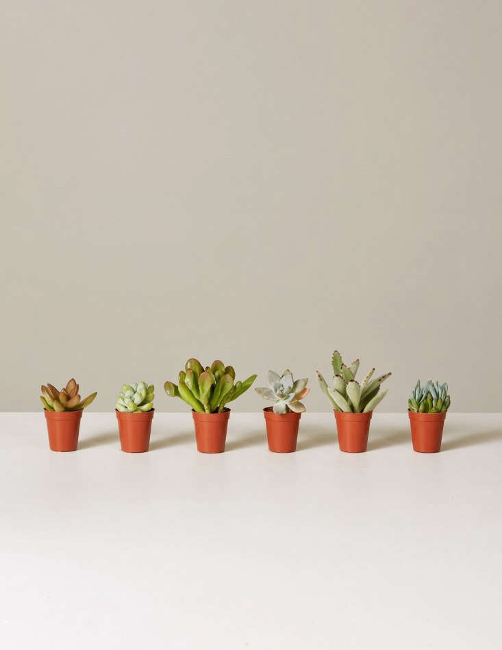 An Assortment of Six Tiny Succulents is $30. &#8