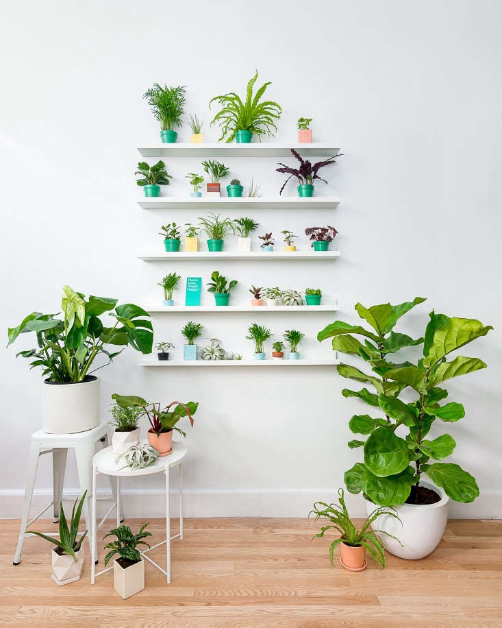 Display shelves show The Sill&#8