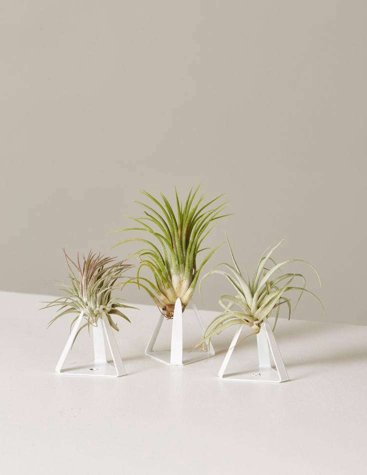 Air plants, $30 for an assortment of five, fall under the &#8